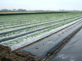 生姜專用地膜報價-供應山東價格合理的生姜專用地膜