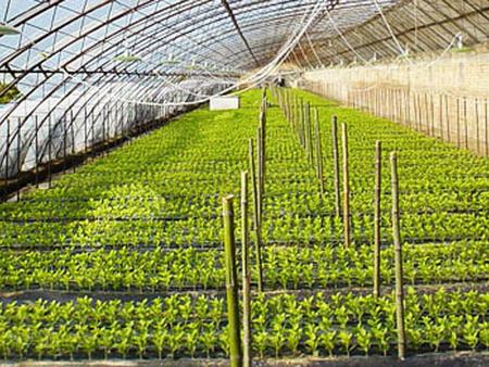 山东大棚农膜-品质好的农膜服务商