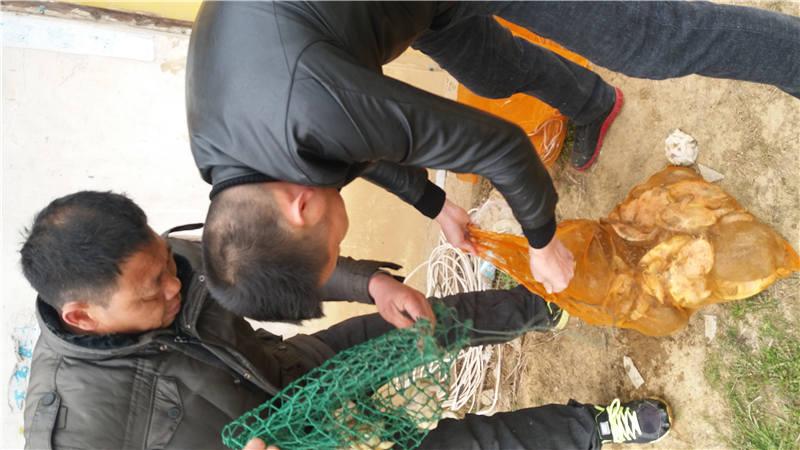甲鱼哪里有供应 易成活的甲鱼苗