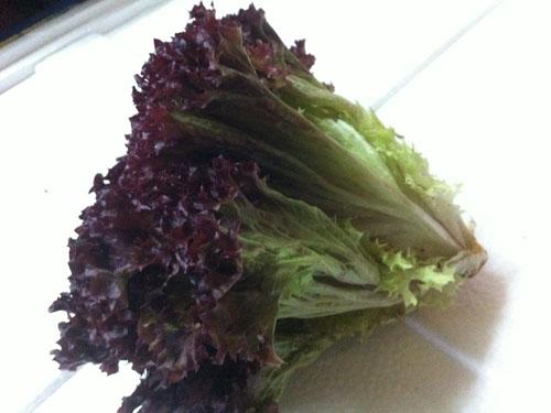 宁德新鲜蔬菜配送——哪儿有批发物超所值的新鲜蔬菜