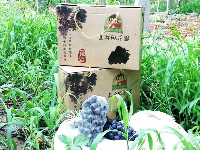 有機水果 供應山東銷量佳的有機水果采摘