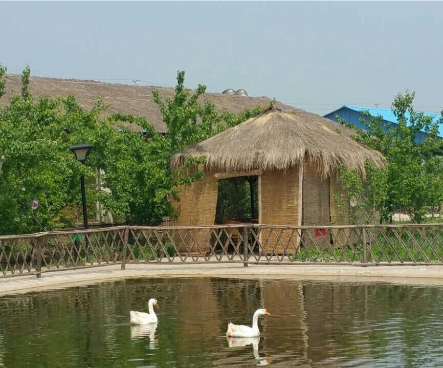河北土窑鸡加盟品牌_沙河湾农庄提供有品质的土窑鸡加盟