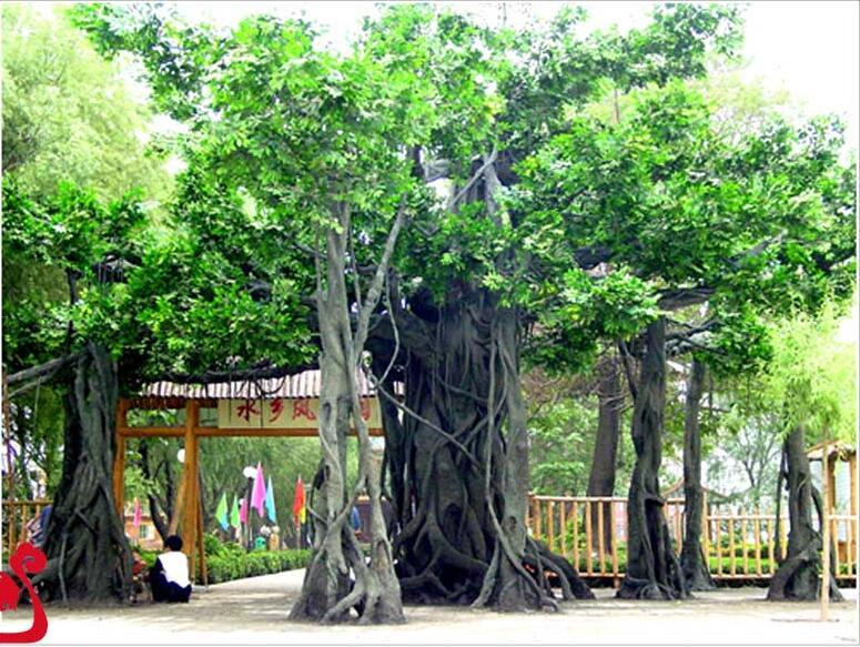 西安哪里可以做假树制作_安康假树