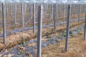 葡萄架水泥柱-出售西安好用的水泥柱