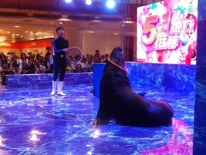 上海海狮表演出租_诚荐广东服务好的动物杂技表演