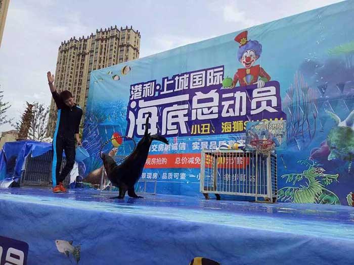 北京海狮表演出租-找专业的动物杂技表演优选鑫耀艺术团