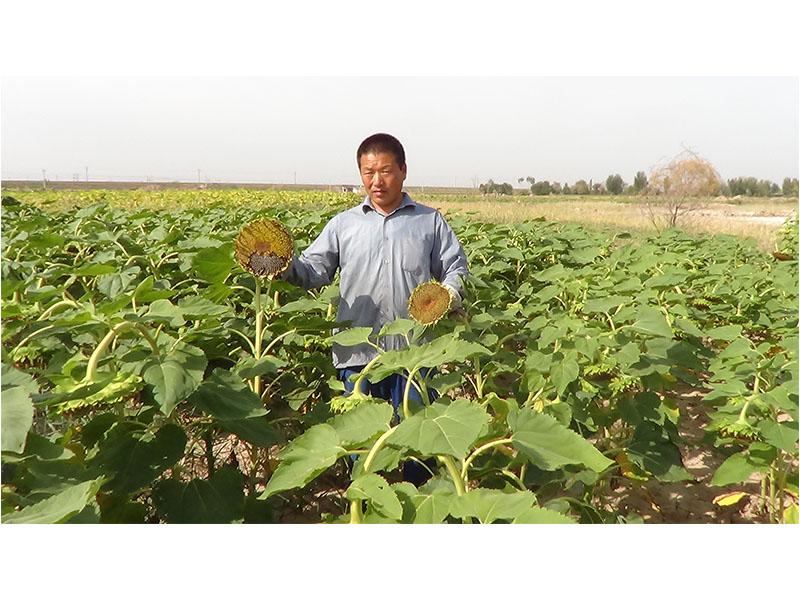 生物有机肥价格|供应专业的生物有机肥