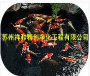石家庄高科技处理鱼池水发绿青苔藻类,给你一个良好的环境。