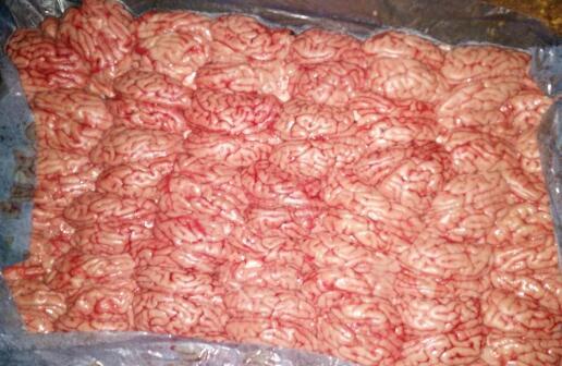 威海高品质成型单摆猪脑批售,优质猪脑厂家