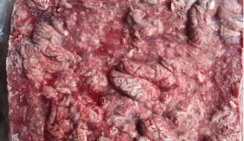 品质好的混冻成板猪脑批售,常年收药用猪脑