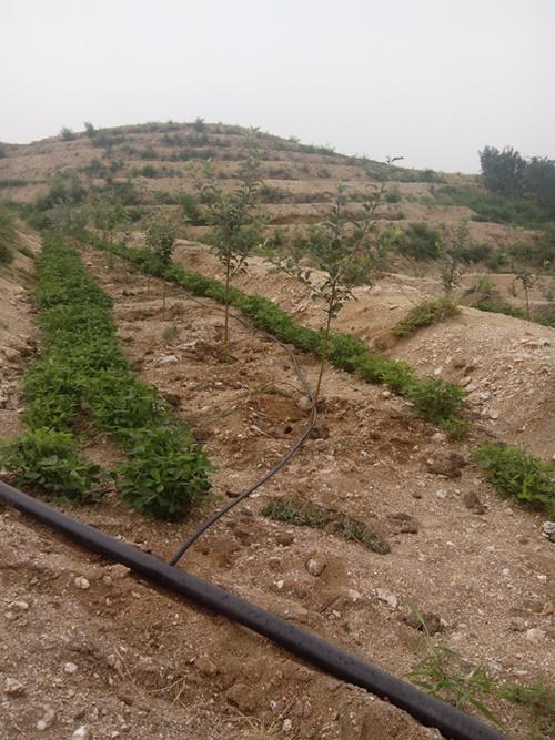 唐山大田滴灌厂家-河北润田节水设备提供质量硬的大田滴灌