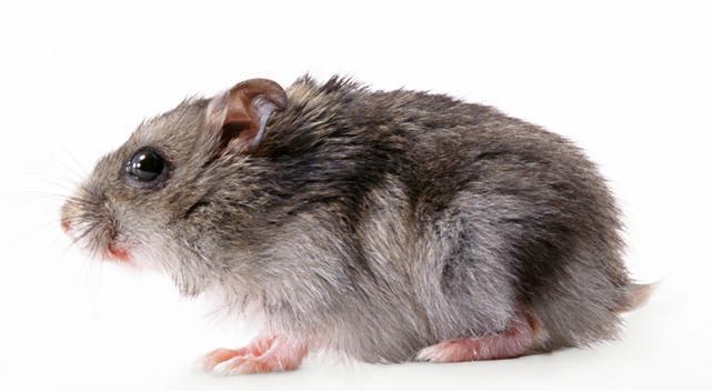 西安单位除老鼠-专业的除老鼠提供