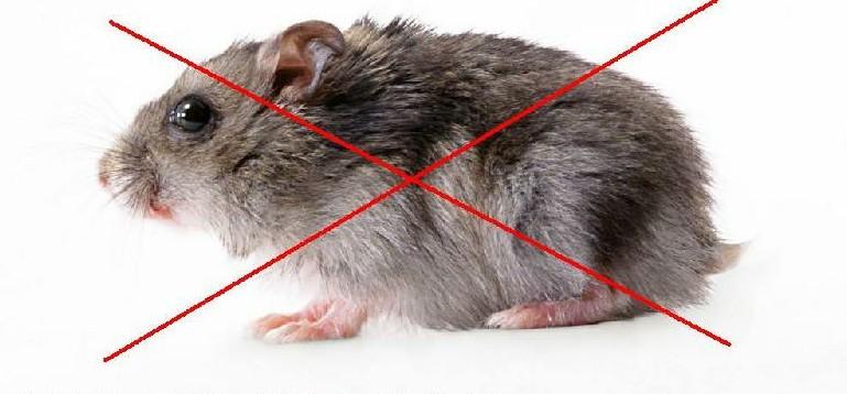 找口碑好的灭老鼠上卫健环保,西安医院灭老鼠妙招