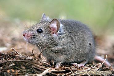 西安医院灭老鼠公司-西安灭老鼠公司哪家好