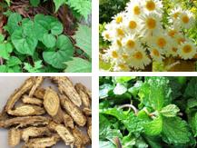 胶原蛋白液|好用的中草药植物提取液品牌推荐
