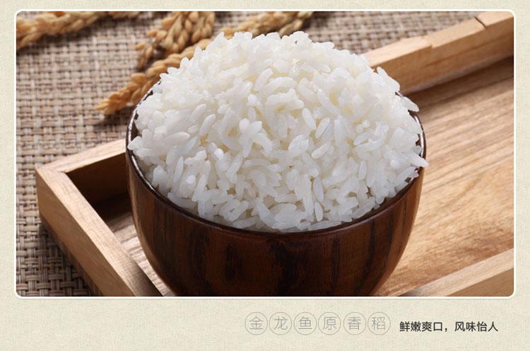 原香稻壽光代理|供應濰坊新品金龍魚原香稻