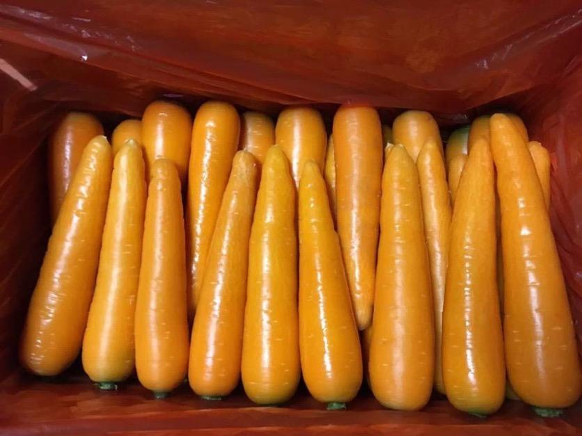 淄博胡萝卜超市供应|精装胡萝卜哪里有卖