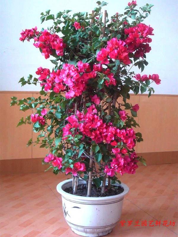 重庆哪家办公室植物租赁公司信誉好-花卉租摆热线电话