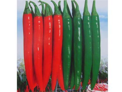 河北进口尖椒种子 山东品种好的进口尖椒种子供应