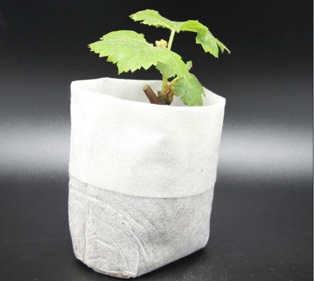 育苗袋厂-供应山东口碑好的育苗袋