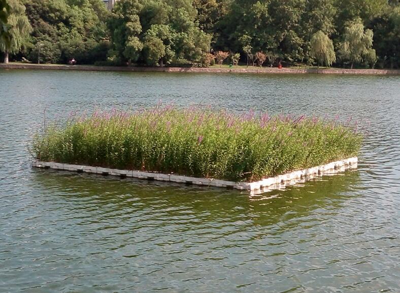 公园水景-河北哪里有出售生态浮岛
