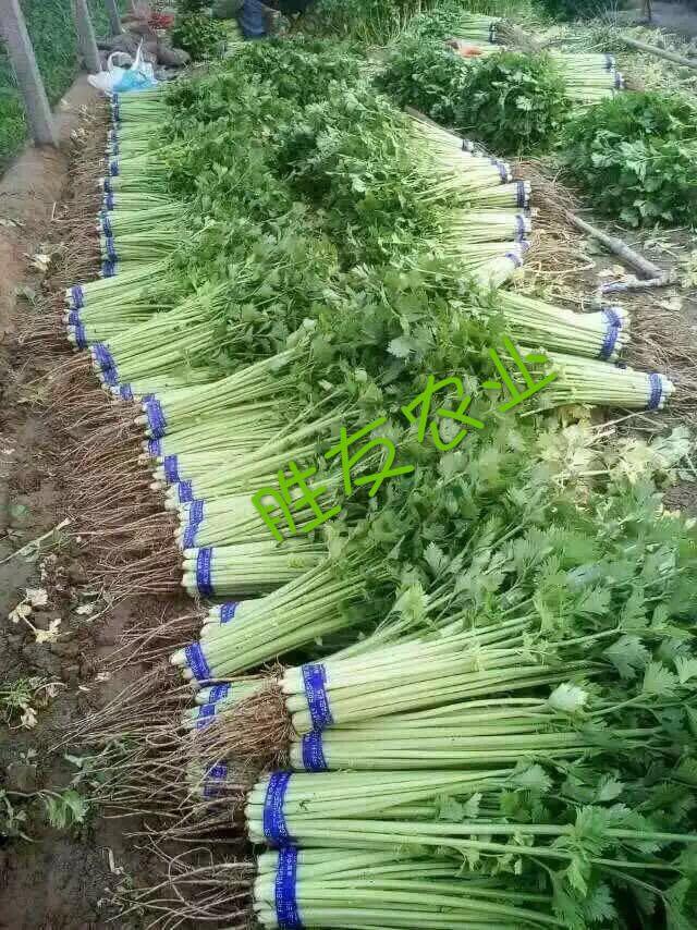 生鲜蔬菜供应 生鲜蔬菜配送 无公害蔬菜供应【精美包装@胜友】