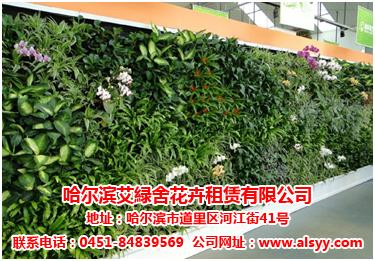 优惠的花卉租赁哈尔滨哪里有|花卉租赁提供