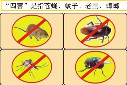 集美灭蚜虫-厦门专业的消杀除虫服务