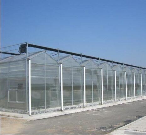 文洛式玻璃温室/连栋温室大棚