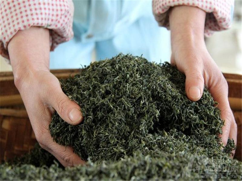 雅安高品质蒙山茶哪里买,成都蒙顶茶批发