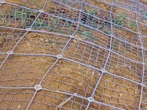 蜘蛛网价格|供应衡水好的绞索网