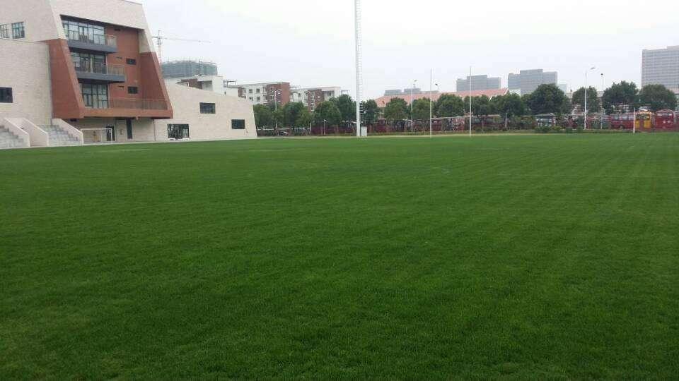 【供應廠家】蚌埠人造草坪采購|*蚌埠人造草坪哪家好|眾禾體育