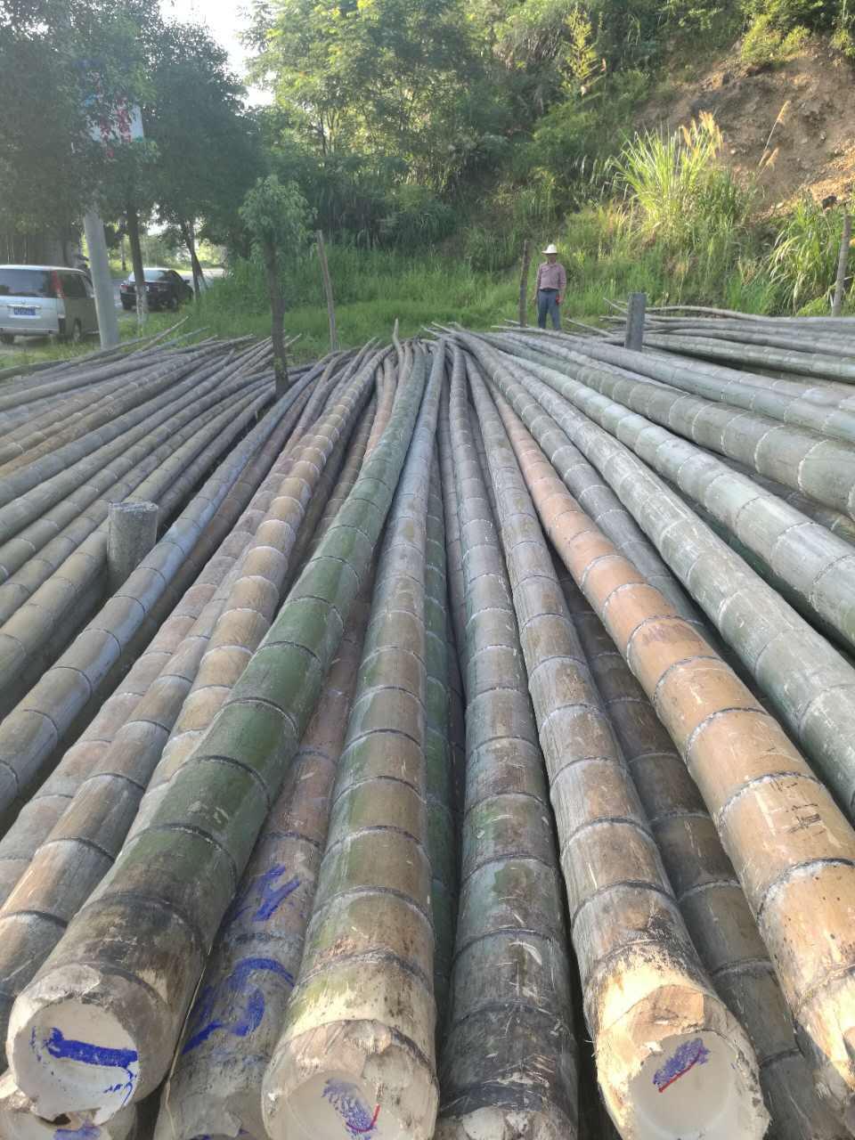 供应湖北有品质的菜架竹,毛竹