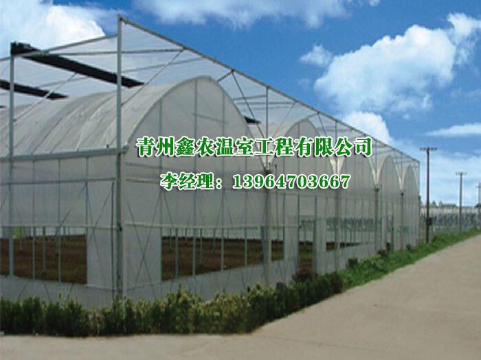 连栋温室设计-报价合理的日光温室哪里有