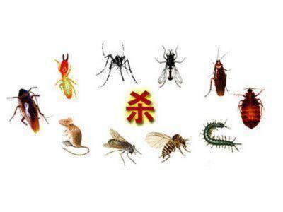 泉州除白蚁-资深的虫害防治公司当属同心洁