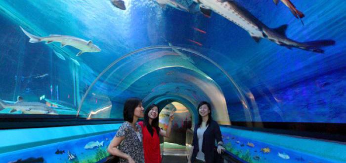 展示鱼缸-亚克力隧道行情价格