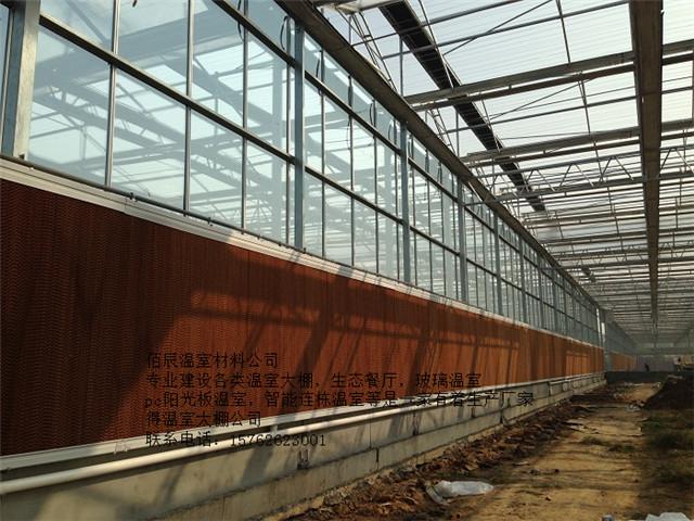 抢手的温室造价一直很低专业的温室公司-山东结实耐用的温室