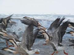 鸿雁厂家|蚌埠划算的鸿雁哪里有供应