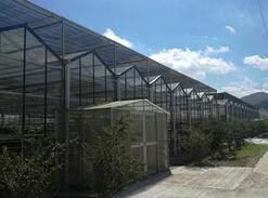 河南双层膜温室大棚|想建温室大棚就到启兴温室园艺工程