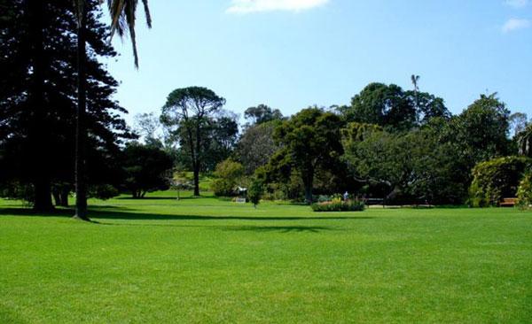哪儿有专业的园林出租-翔安园林设计