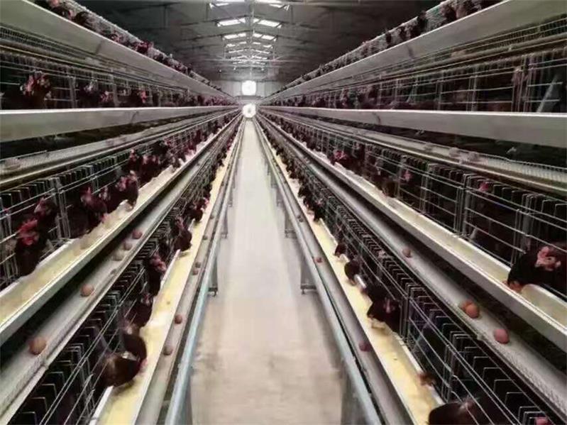 【別問,問就是好】全自動肉雞料線——蛋肉雞喂料設備