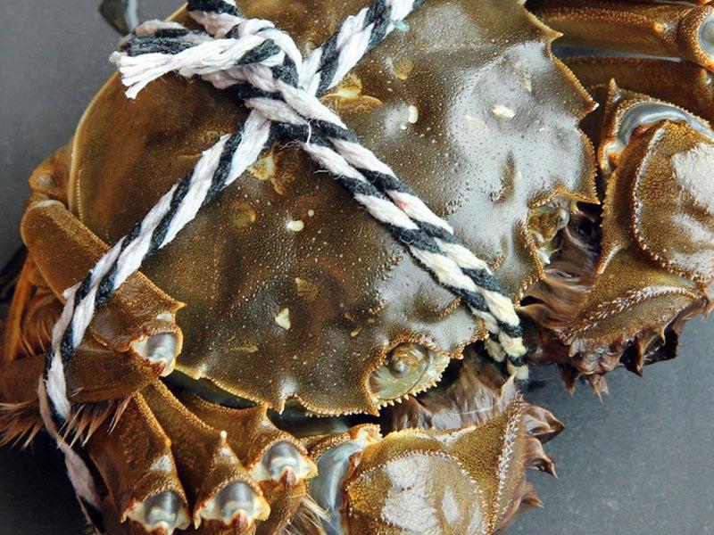 東營甲魚招商加盟-物超所值的黃河口大閘蟹推薦