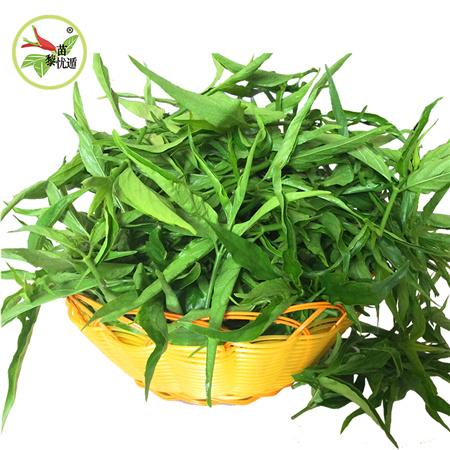 黎苗珍宝出售实用的野生优顿草|黎王草
