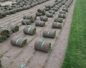上海百慕达黑麦草混播草坪|哪里能买到超值的百慕大黑麦草混播草坪