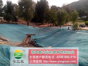 深圳可靠的紫穗槐供应商 灌木种子哪里有