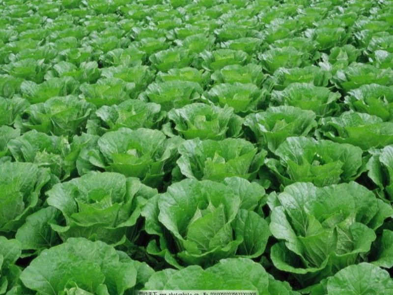 福建蔬菜类配送费用-生鲜配送电话