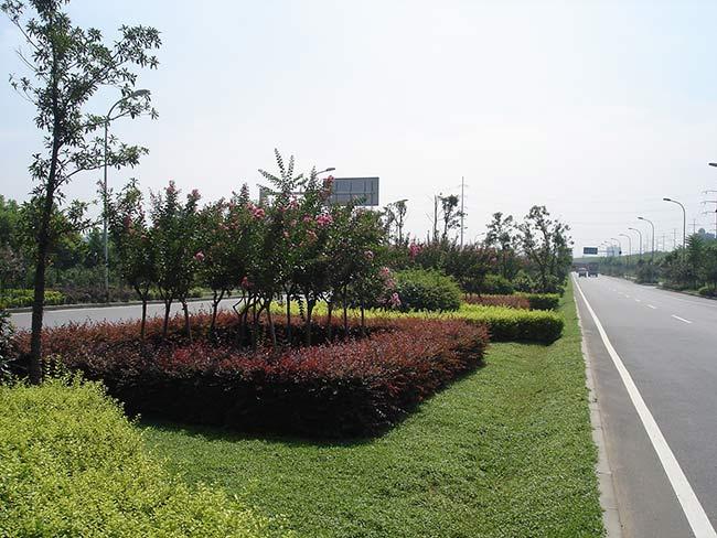 潍坊信誉好的绿化苗木经销商推荐 北海道黄杨基地