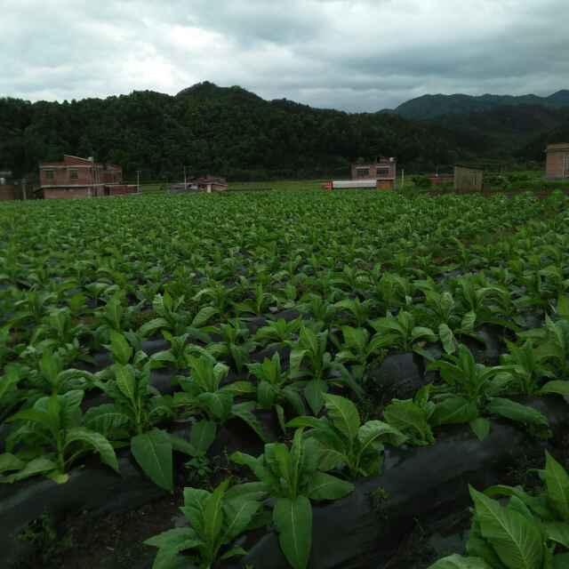 贵州地膜批发-黔南布依族苗族自治州有保障的烟草种植地膜提供商