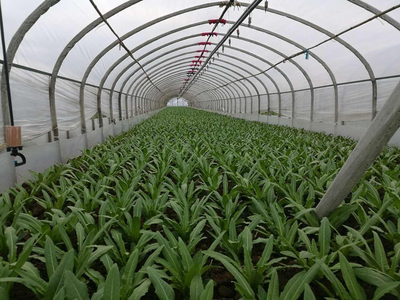 黔南農用塑料薄膜-為您提供好的大棚膜資訊