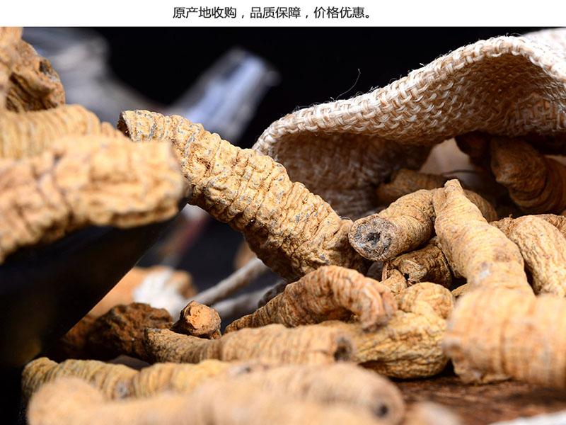 想买优惠的巴戟,就来广晟农业|巴戟技术指导